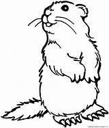 Prairie Erdmaennchen Dog Coloring Drawing Tiere Stehendes Animals Malvorlage Malvorlagen Ausmalbild Gratis Herunterladen Dieses sketch template