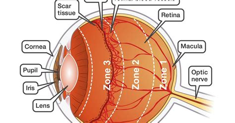 complete guide  eyesight  vision  natural