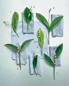 Gardening: Lily of the Valley Martha Stewart