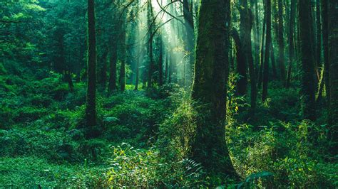 Forests Woods Jungles: What's the Difference Mental Floss