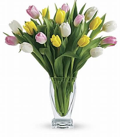 Tulip Teleflora Treasure Flowers Mother Flower Phoenix