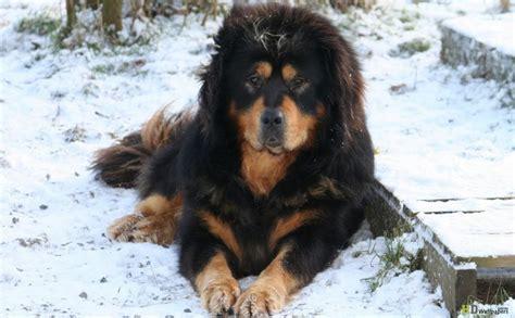 strange  unusual dog breeds page
