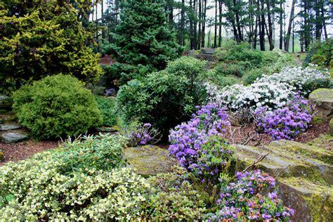 Garten Gestalten Halbschatten by Steingarten Im Halbschatten 187 Welche Pflanzen Kommen Infrage