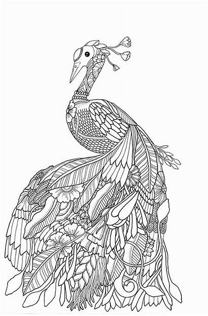 Coloring Adult Pages Books Colouring Exotic Drawings