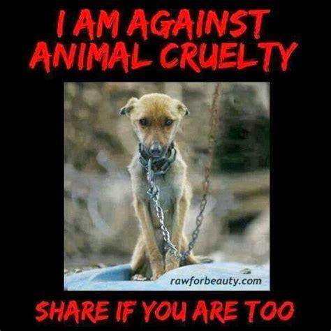 sensitive  animal abuse   dog