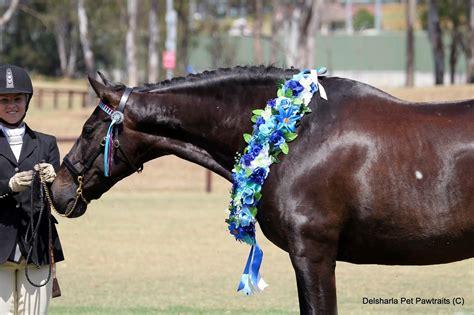 horses andalusian dressage spanish exceptional horse horsezone western