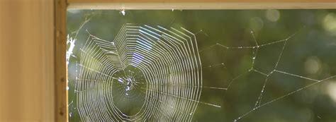 signs   spider infestation rentokil