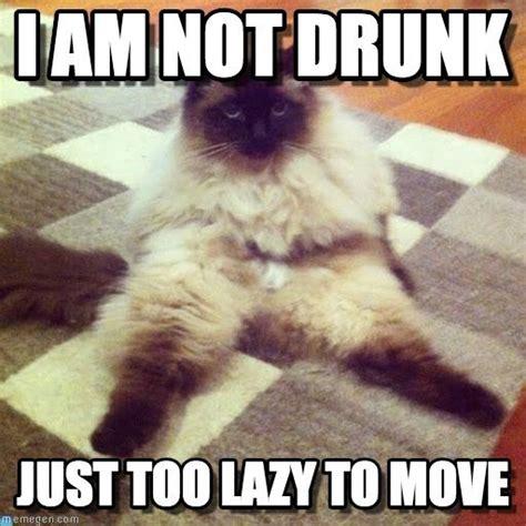 Lazy Cat Meme - lazy cat still cute lazy cat i am not drunk just too lazy to move tags cat drunk haha