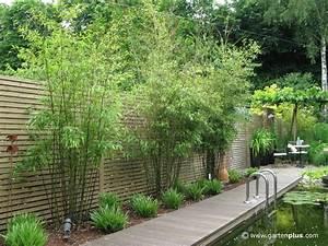 Garten Bepflanzen Ideen : sichtschutz garten pflanzen google suche pinteres ~ Lizthompson.info Haus und Dekorationen
