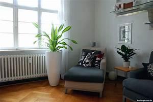 Zimmerpflanzen Für Schatten : zimmerpflanzen tipps f r den schatten tolle pflanzen und ~ Michelbontemps.com Haus und Dekorationen