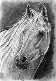 White Horse Pencil Drawing