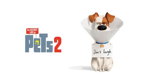 wallpaper  secret life  pets  max animation