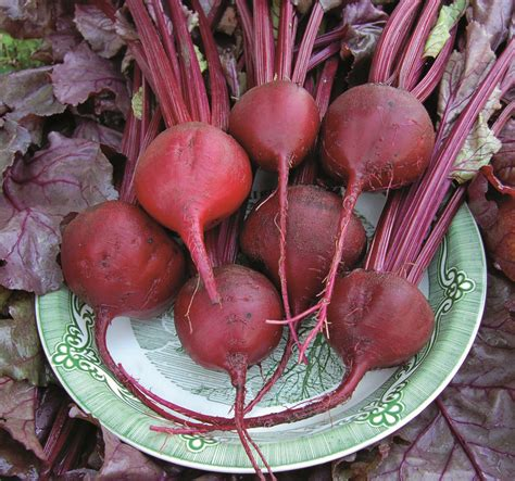 root vegetables  falls  flavorful options