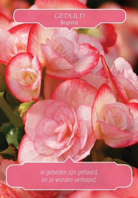 bloemen orakel doreen virtue bloementherapie orakelkaarten