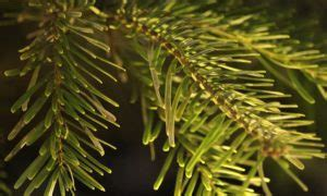 künstlicher weihnachtsbaum spritzguss test ᐅ bester spritzguss weihnachtsbaum 2019 ᐅ spritzguss tannenbaum test