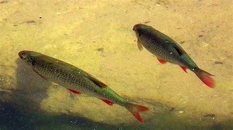 fische für teich kaufen garten teich neu und gebraucht kaufen bei dhd24