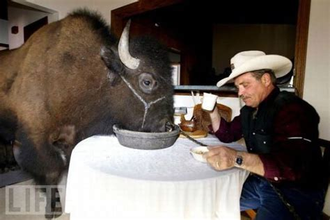 buffalos    amazing house pets damn cool pictures