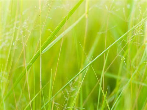 verde pasto