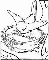 Coloring Pages Bird Preschoolers Printable Popular sketch template