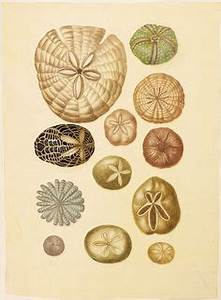 1000+ images about Naturalistic illustration on Pinterest ...