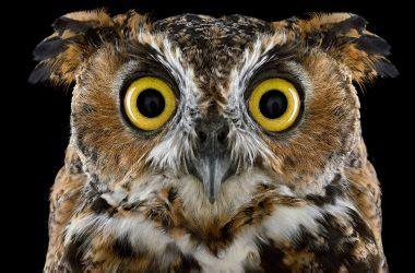 awesome owl image super owl photo