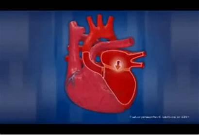System Circulatory Gifs Gfycat