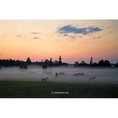Misty Landscape Tartu County Estonia EuropeJeg Gikk