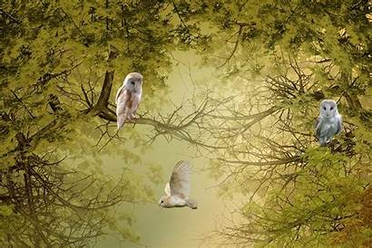 Owls Birds Trees Nature Allwallpaper Dslr Mobile
