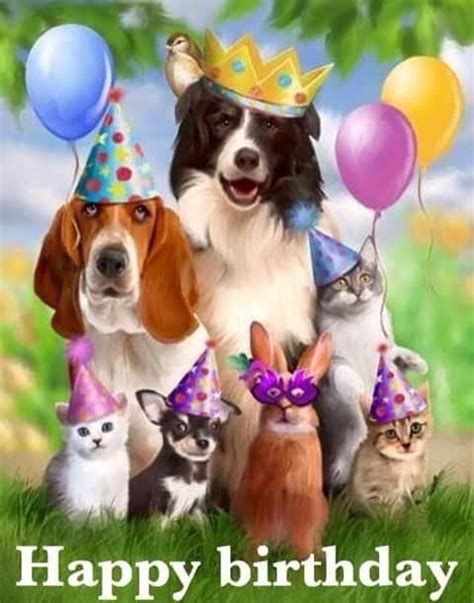 animal happy birthday graphic pictures   images