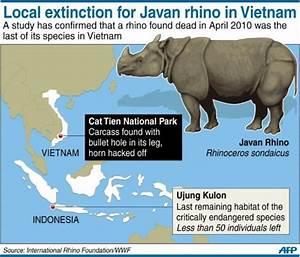 Rhino poached to extinction in Vietnam: WWF