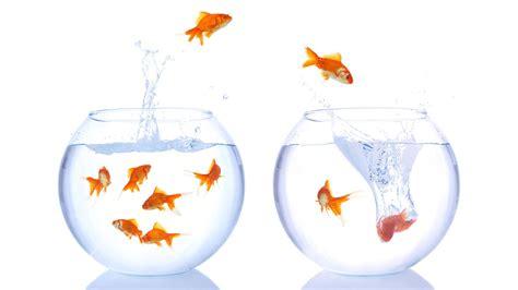 aquarium bocal poisson oups