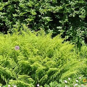 Winterharte Pflanzen Liste : herausragende immergr ne winterharte pflanzen f r k belpflanzen obi ratgeber modernen 12 ~ Eleganceandgraceweddings.com Haus und Dekorationen