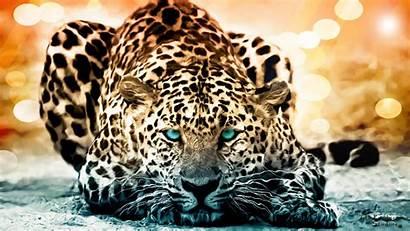Cool Resolution Animal Wallpapers Wild Desktop Enable