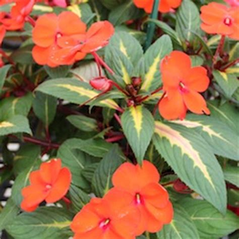 standouts  csu trial garden greenhouse product news