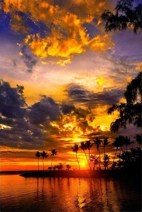 richtig einzigartige bilder von palmen archzinenet