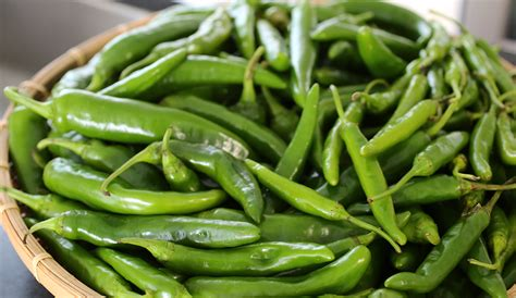 green chili pepper green chili pepper pickles gochu jangajji recipe maangchi com