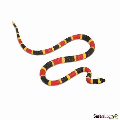 Snake Clip Coral Clipart Snakes Water Moccasin