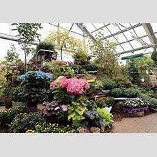 Gartenmarkt  Teterower Gartenmarkt