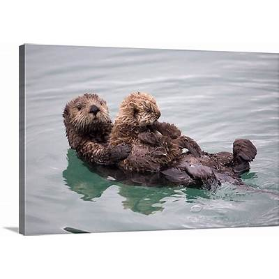 Female Sea otter holds newborn pup while floating in