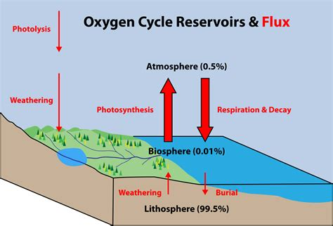 why is ozone an important form of oxygen oxygen cycle wikipedia