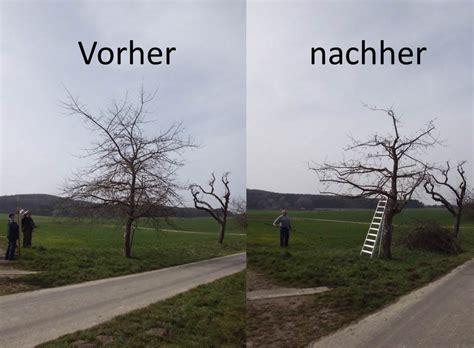 kirschbaum schneiden vorher nachher aktuell