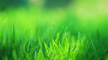 Grass 4k Field Wallpapers Nature Resolution Desktop