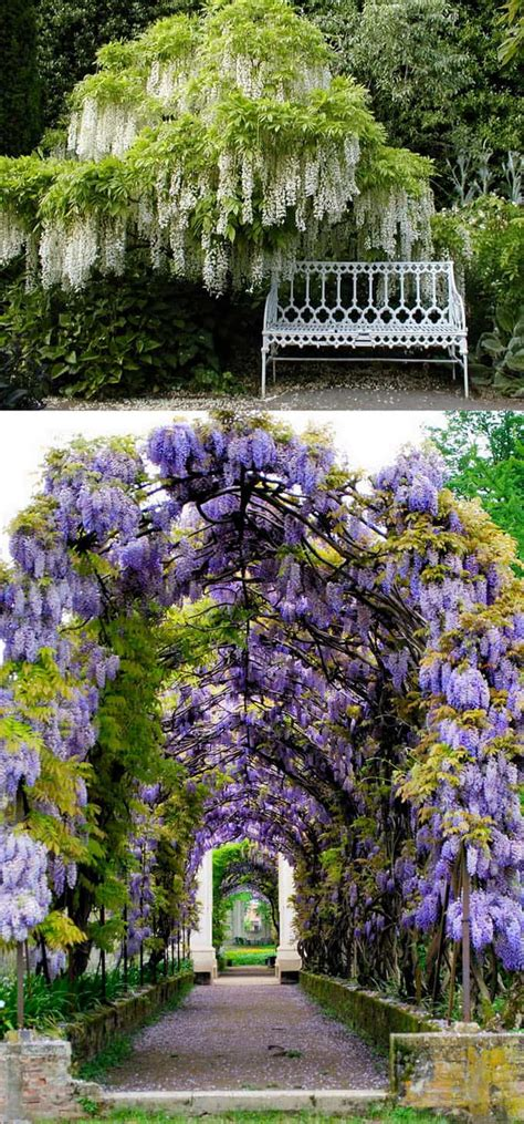 20+ Favorite Flowering Vines And Climbing Plants  A Piece