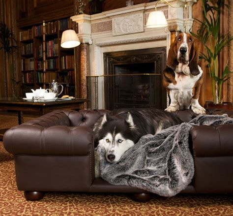 Hund Auf Sofa by Balmoral Brown Faux Or Real Leather Sofa Bed