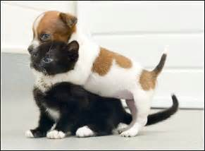 Non Shed Dog Breeds by Kittens And Puppies Playing Kitten Pet Photos Gallery