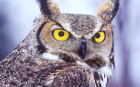 Beautiful Animal Wallpapers - beautiful animals wallpapers hd desktop widescreen free