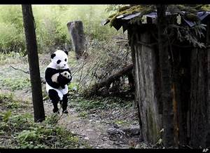 Scientists Dressed As Pandas Release Baby Pandas Into Wild ...