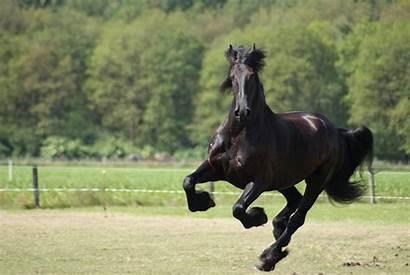 Horse Horses Wallpapers 4k A12 1080p Widescreen