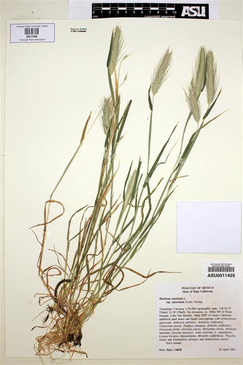 http://swbiodiversity.org/seinet/taxa/index.php?taxon=15329