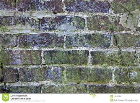 brick wall  mold  lichens royalty  stock